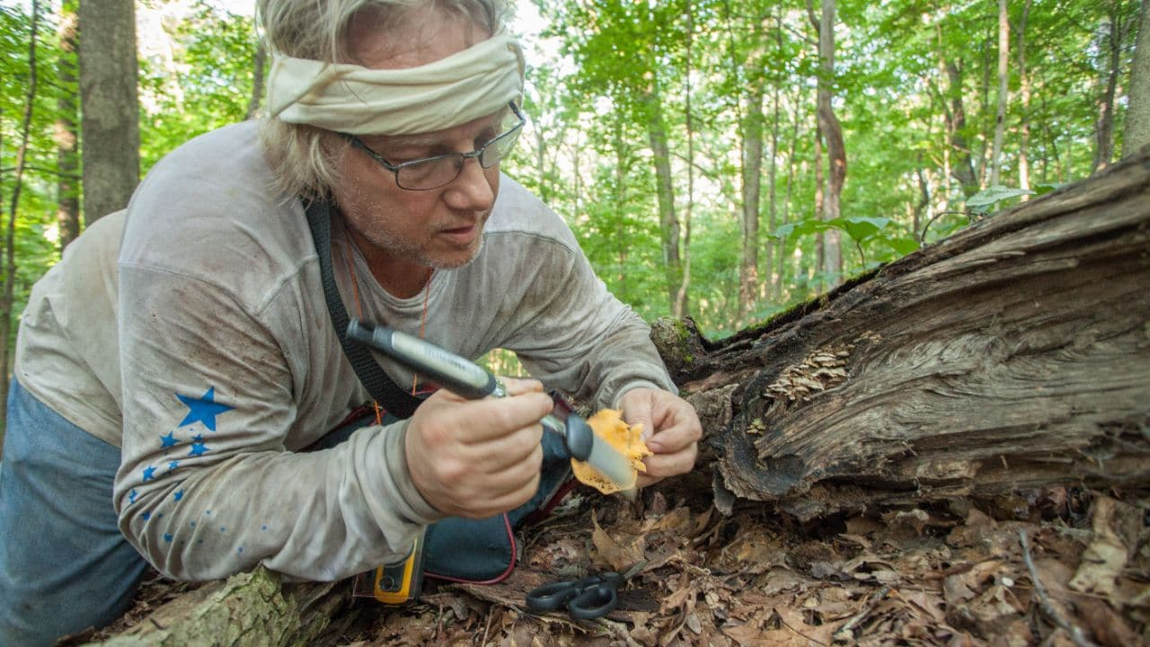 Hazlett's friend Gordon Sachtjen gently cleans a mushroom with a brush to remove soil.