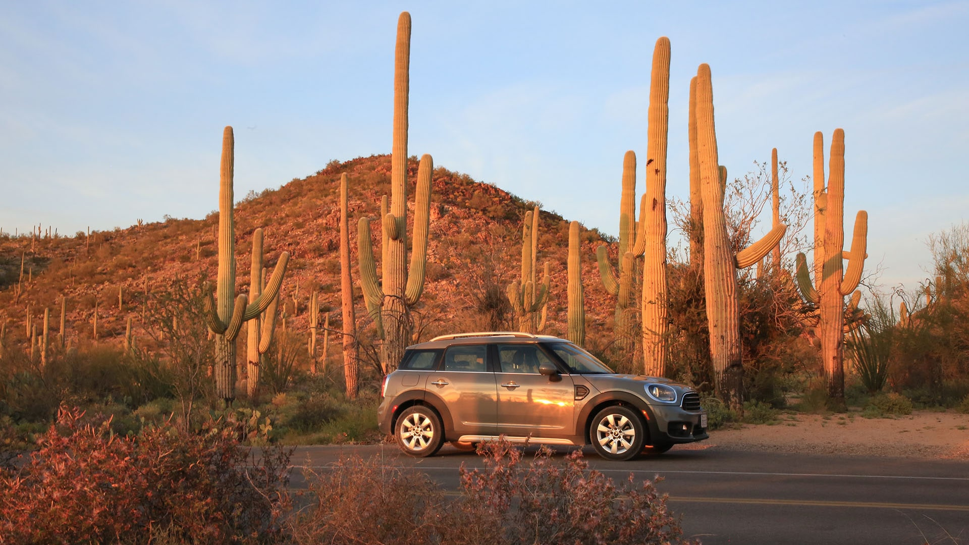 A Mini Cooper is dwarfed by giant saguaro cactus at Saguaro National Park in Arizona.