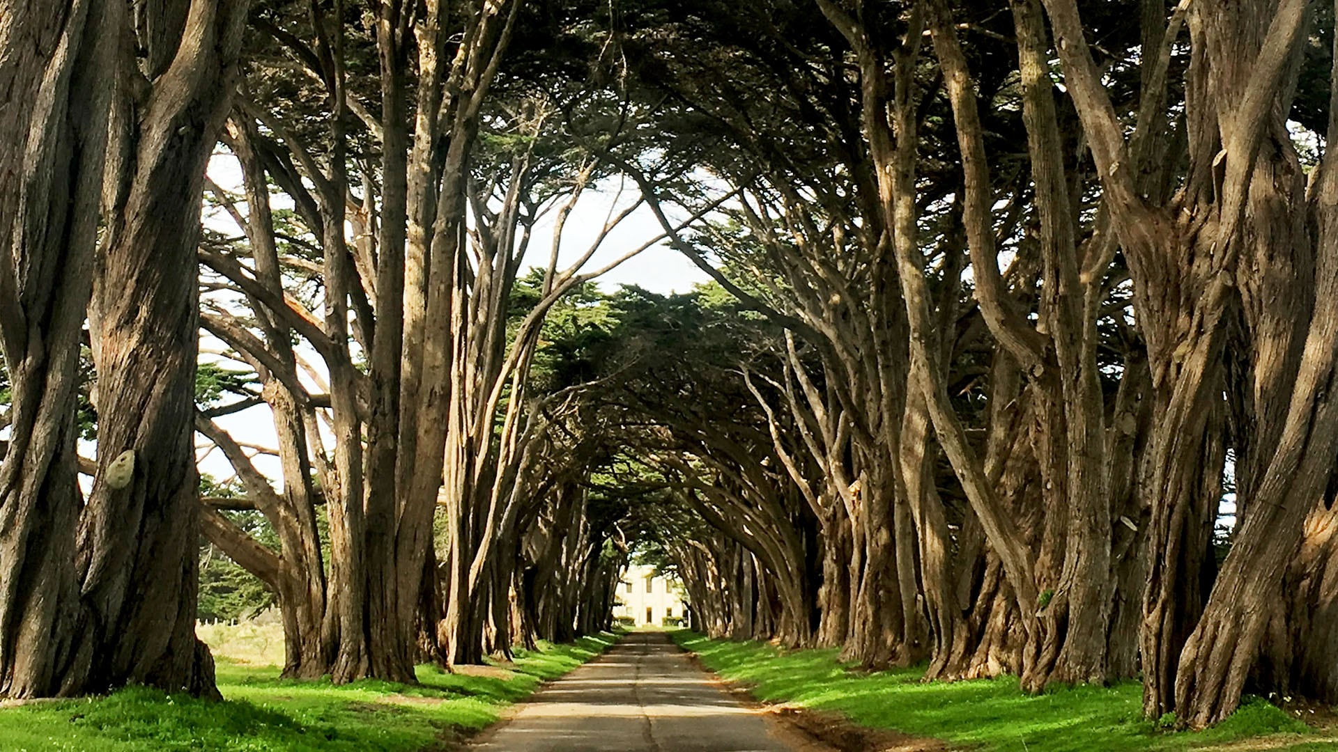 he Cypress Tree Tunnel at Point Reyes, California, is worth a stop, especially for photographers.